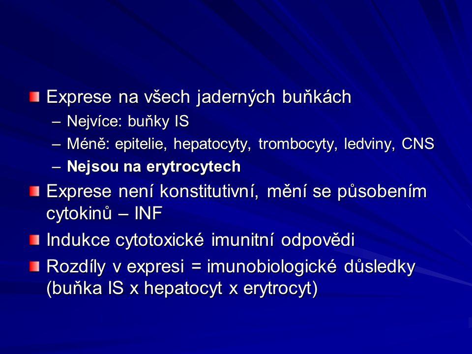 Exprese na všech jaderných buňkách –Nejvíce: buňky IS –Méně: epitelie, hepatocyty, trombocyty, ledviny, CNS –Nejsou na erytrocytech Exprese není konstitutivní, mění se působením cytokinů – INF Indukce cytotoxické imunitní odpovědi Rozdíly v expresi = imunobiologické důsledky (buňka IS x hepatocyt x erytrocyt)