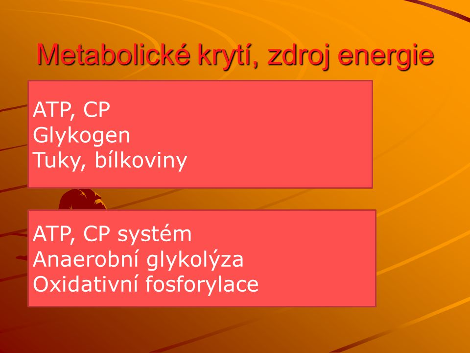 Funkční a metabolická charakteristika Oxidativní způsob nedochází k tvorbě laktátu ( jen minimálně ) G + 38P + 38ADP + 6O 2 6CO 2 + 44H 2 O + 38ATP MK + 130P + 130ADP + 23O 2 16CO 2 + 146H 2 O + 130ATP