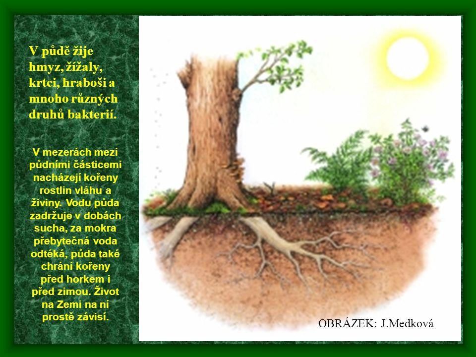 V půdě žije hmyz, žížaly, krtci, hraboši a mnoho různých druhů bakterií. V mezerách mezi půdními částicemi nacházejí kořeny rostlin vláhu a živiny. Vo