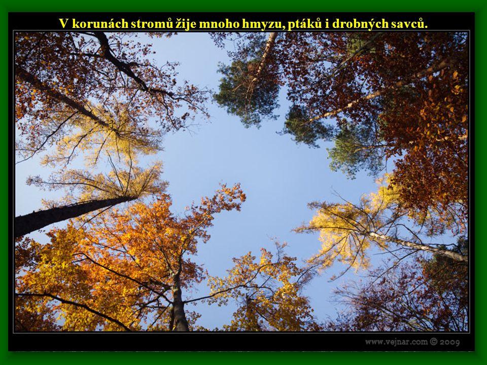 V korunách stromů žije mnoho hmyzu, ptáků i drobných savců.
