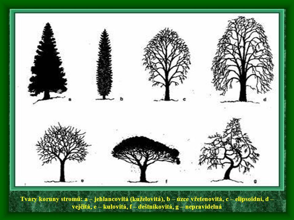 Tvary koruny stromů: a – jehlancovitá (kuželovitá), b – úzce vřetenovitá, c – elipsoidní, d – vejčitá, e – kulovitá, f – deštníkovitá, g – nepravideln