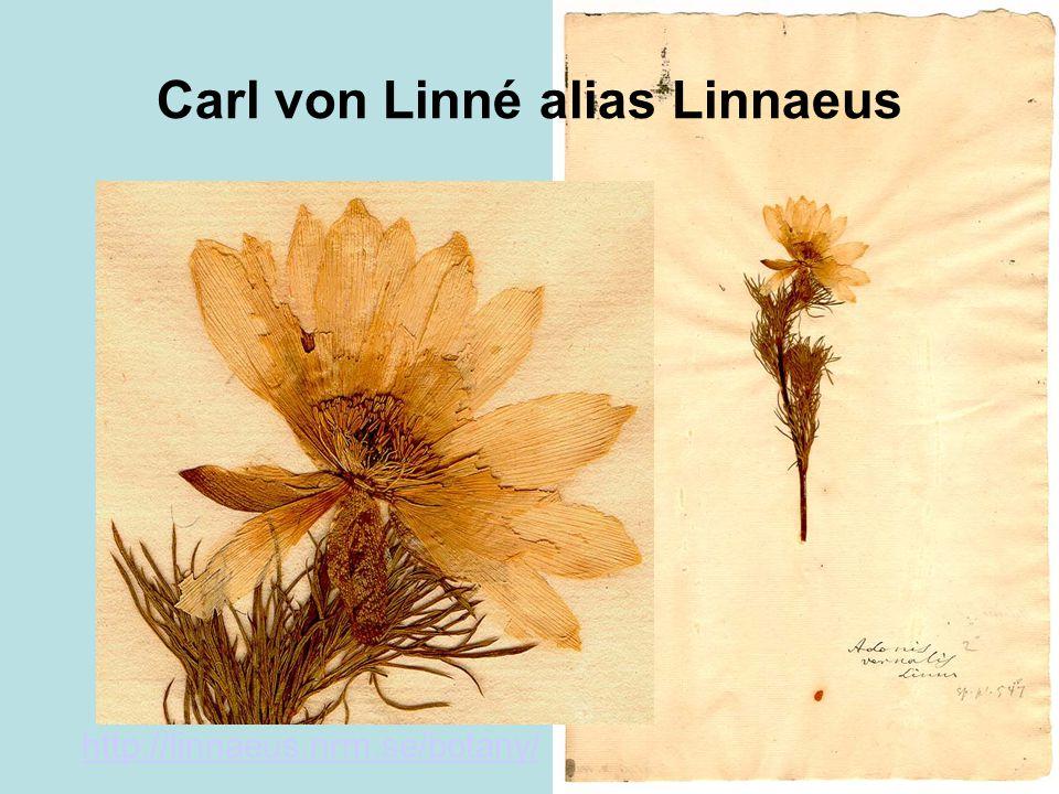 Carl von Linné alias Linnaeus http://linnaeus.nrm.se/botany/