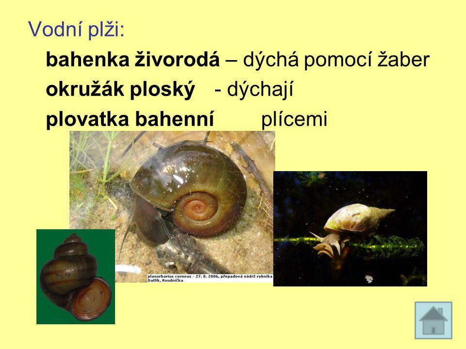 Vodní plži: bahenka živorodá – dýchá pomocí žaber okružák ploský- dýchají plovatka bahenníplícemi
