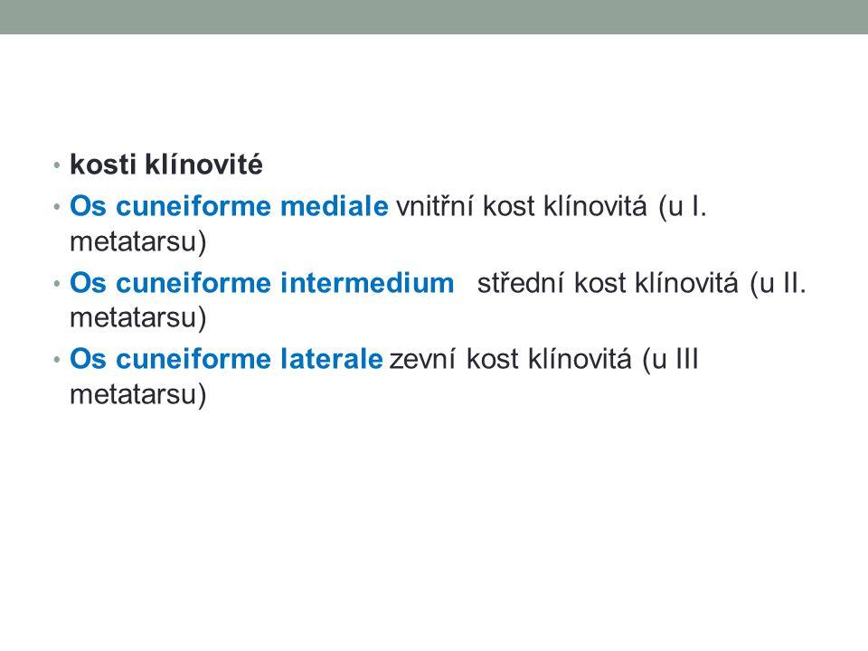kosti klínovité Os cuneiforme mediale vnitřní kost klínovitá (u I. metatarsu) Os cuneiforme intermedium střední kost klínovitá (u II. metatarsu) Os cu