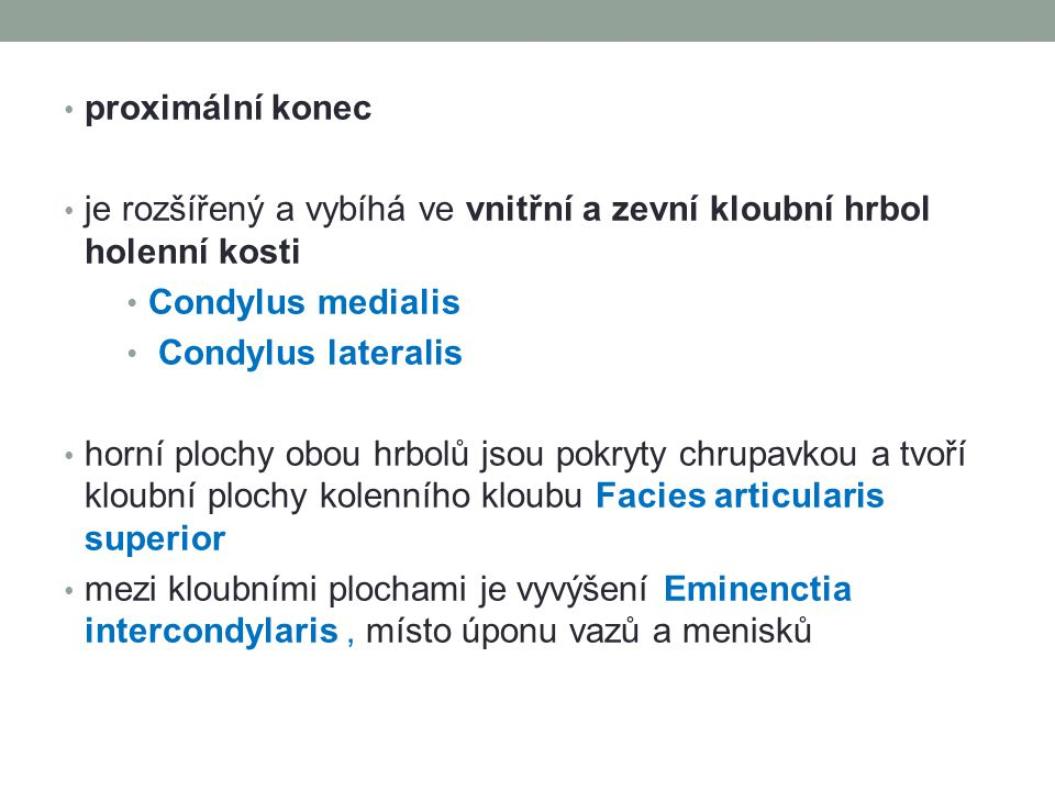 proximální konec je rozšířený a vybíhá ve vnitřní a zevní kloubní hrbol holenní kosti Condylus medialis Condylus lateralis horní plochy obou hrbolů js