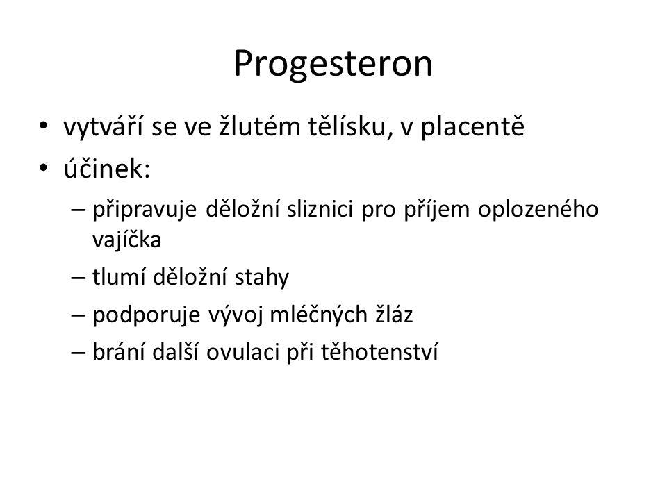 Progesteron vytváří se ve žlutém tělísku, v placentě účinek: – připravuje děložní sliznici pro příjem oplozeného vajíčka – tlumí děložní stahy – podporuje vývoj mléčných žláz – brání další ovulaci při těhotenství