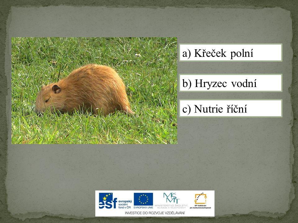 c) Nutrie říční a) Křeček polní b) Hryzec vodní