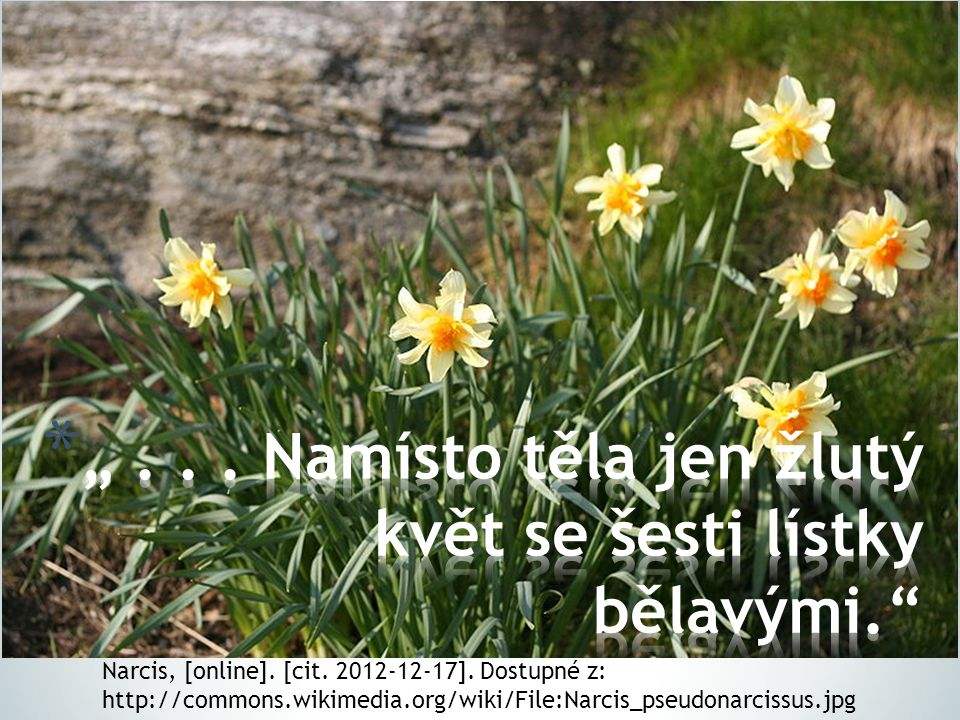 Narcis, [online]. [cit. 2012-12-17]. Dostupné z: http://commons.wikimedia.org/wiki/File:Narcis_pseudonarcissus.jpg