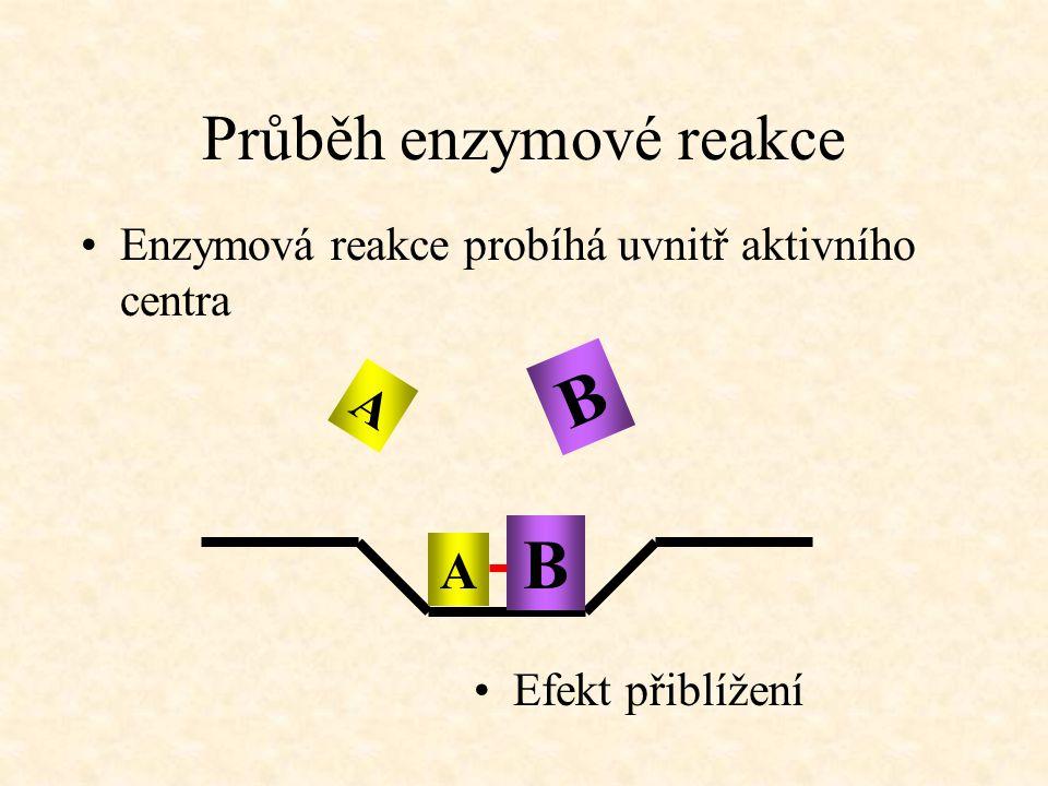 Průběh enzymové reakce Enzymová reakce probíhá uvnitř aktivního centra Efekt přiblížení A B A B