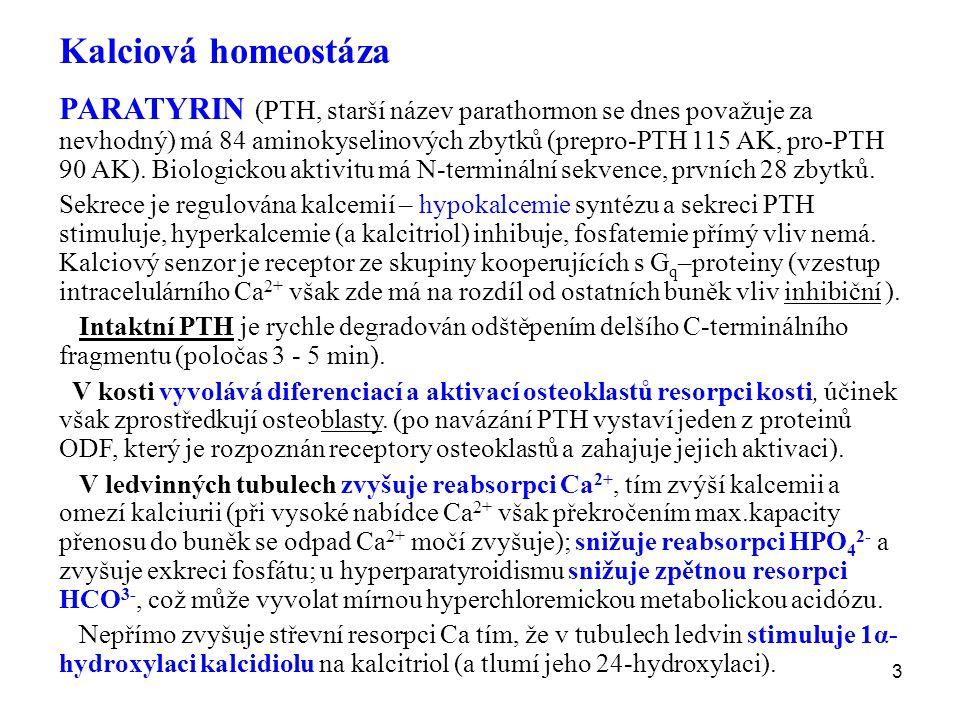 3 Kalciová homeostáza PARATYRIN (PTH, starší název parathormon se dnes považuje za nevhodný) má 84 aminokyselinových zbytků (prepro-PTH 115 AK, pro-PT