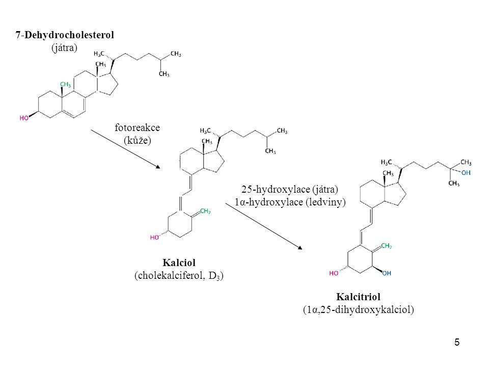 5 7-Dehydrocholesterol (játra) Kalciol (cholekalciferol, D 3 ) Kalcitriol (1α,25-dihydroxykalciol) fotoreakce (kůže) 25-hydroxylace (játra) 1α-hydroxy