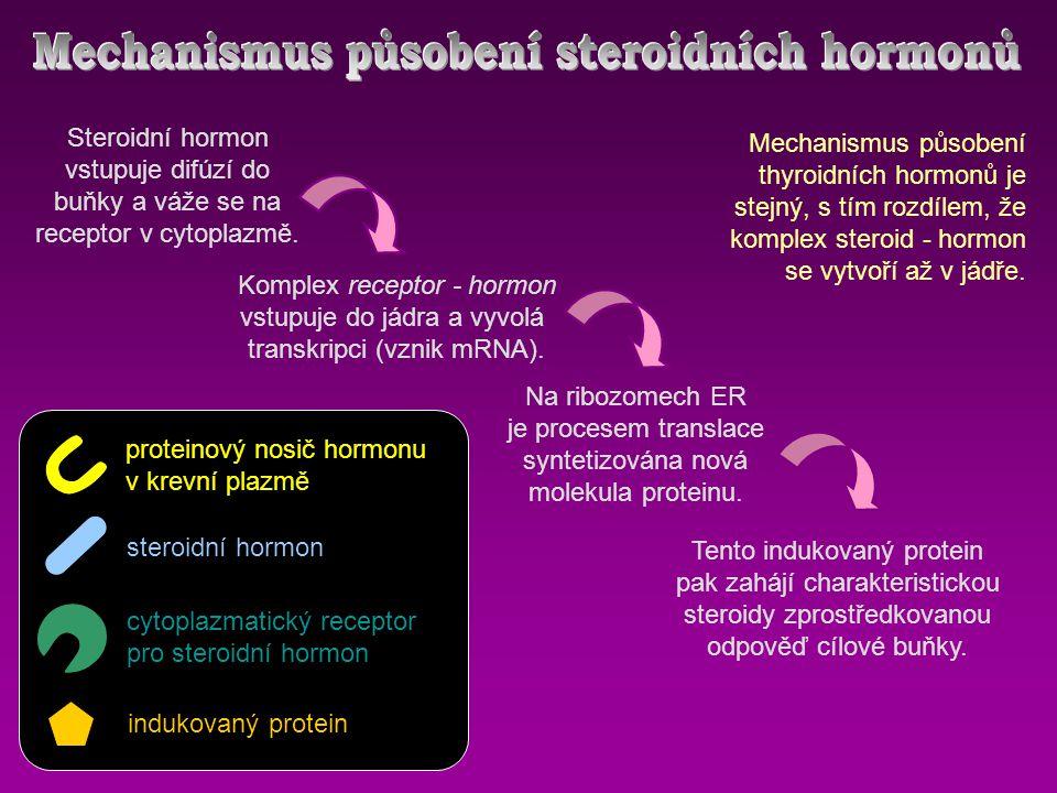 Komplex receptor - hormon vstupuje do jádra a vyvolá transkripci (vznik mRNA).