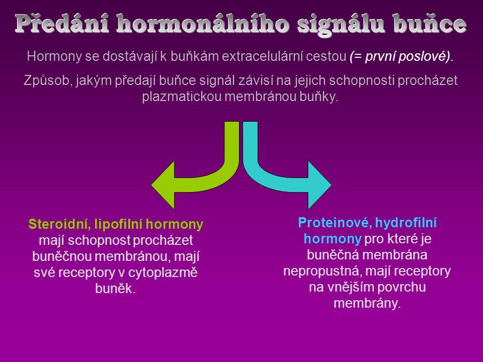 Hormony se dostávají k buňkám extracelulární cestou (= první poslové).