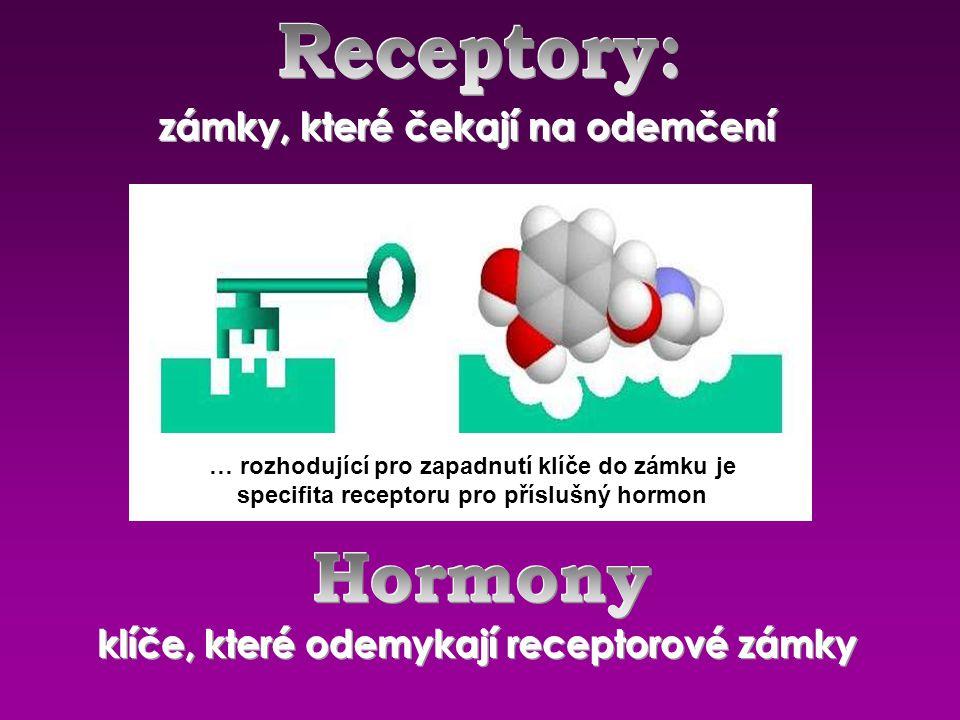 … rozhodující pro zapadnutí klíče do zámku je specifita receptoru pro příslušný hormon