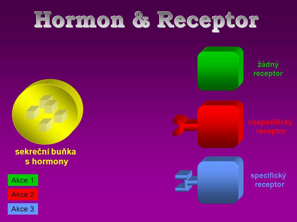 sekreční buňka s hormony žádný receptor specifický receptor nespecifický receptor Akce 1 Akce 2 Akce 3