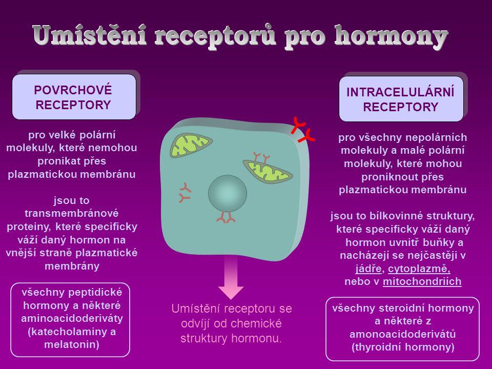 POVRCHOVÉ RECEPTORY INTRACELULÁRNÍ RECEPTORY pro velké polární molekuly, které nemohou pronikat přes plazmatickou membránu jsou to transmembránové proteiny, které specificky váží daný hormon na vnější straně plazmatické membrány všechny peptidické hormony a některé aminoacidoderiváty (katecholaminy a melatonin) pro všechny nepolárních molekuly a malé polární molekuly, které mohou proniknout přes plazmatickou membránu jsou to bílkovinné struktury, které specificky váží daný hormon uvnitř buňky a nacházejí se nejčastěji v jádře, cytoplazmě, nebo v mitochondriích všechny steroidní hormony a některé z amonoacidoderivátů (thyroidní hormony) Umístění receptoru se odvíjí od chemické struktury hormonu.