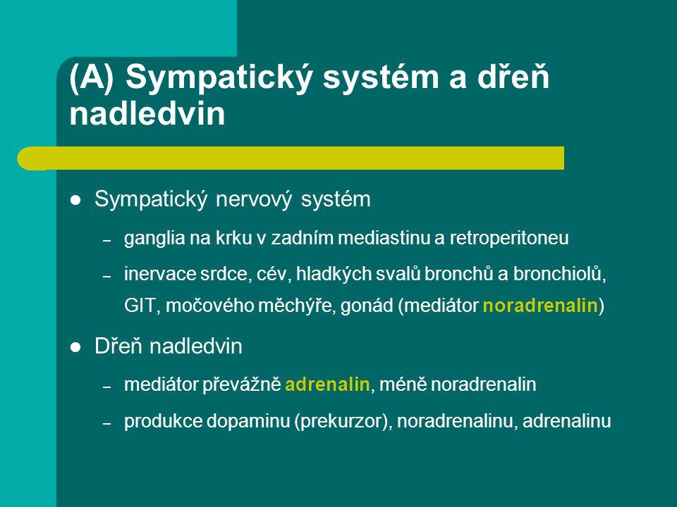(A) Sympatický systém a dřeň nadledvin Sympatický nervový systém – ganglia na krku v zadním mediastinu a retroperitoneu – inervace srdce, cév, hladkýc