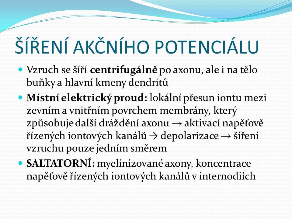 ŠÍŘENÍ AKČNÍHO POTENCIÁLU Vzruch se šíří centrifugálně po axonu, ale i na tělo buňky a hlavní kmeny dendritů Místní elektrický proud: lokální přesun i