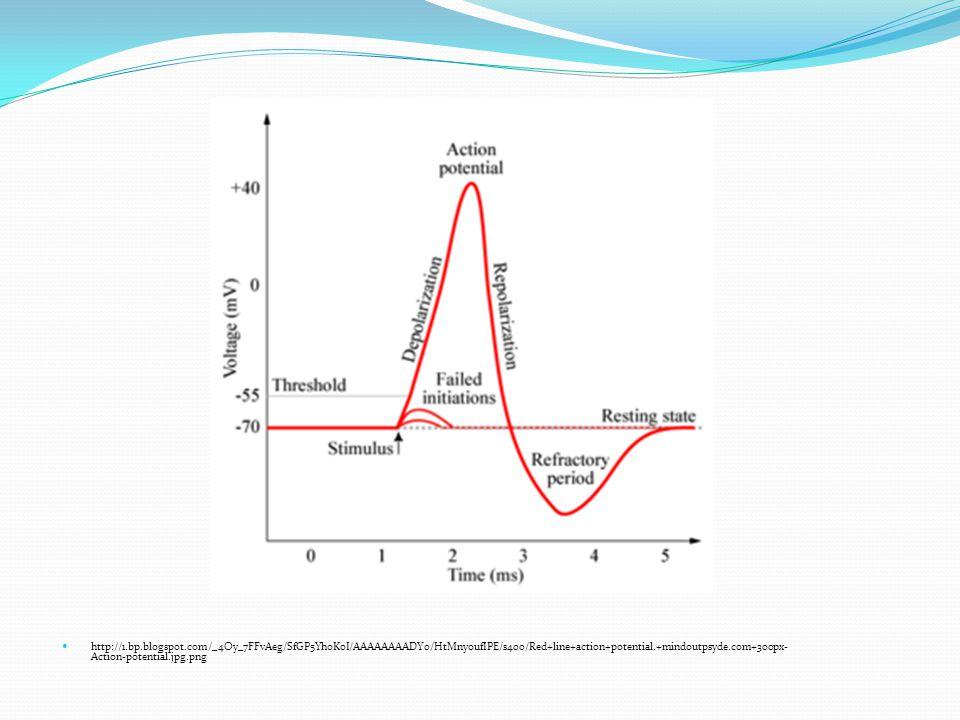 http://kvhs.nbed.nb.ca/gallant/biology/action_potential_generation.jpg