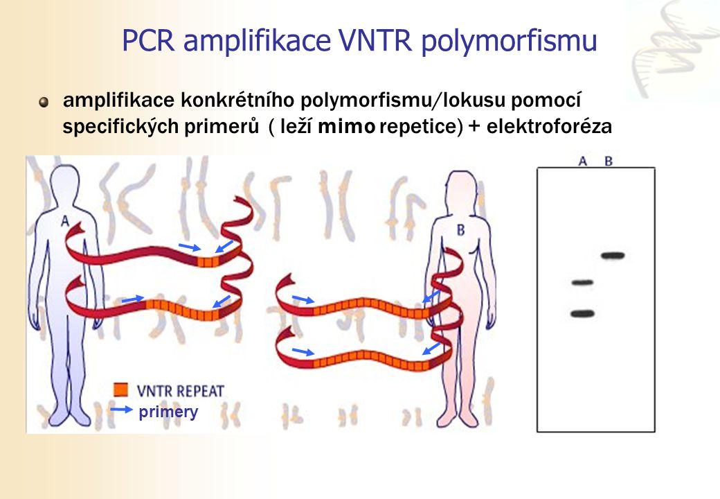 PCR amplifikace VNTR polymorfismu amplifikace konkrétního polymorfismu/lokusu pomocí specifických primerů ( leží mimo repetice) + elektroforéza primer