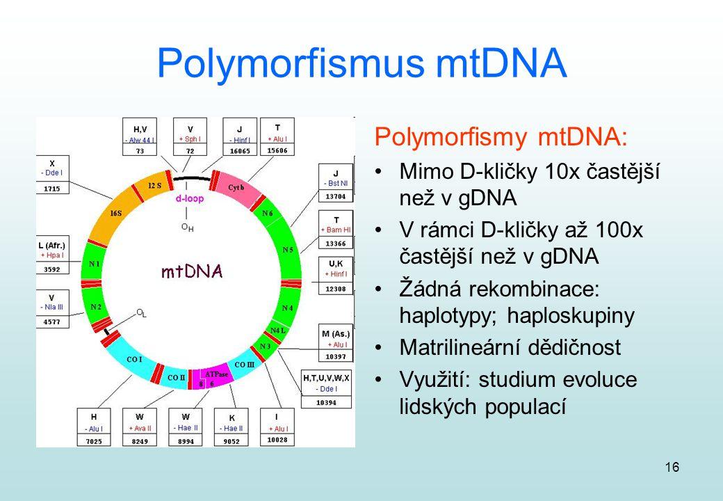 16 Polymorfismus mtDNA Polymorfismy mtDNA: Mimo D-kličky 10x častější než v gDNA V rámci D-kličky až 100x častější než v gDNA Žádná rekombinace: haplo