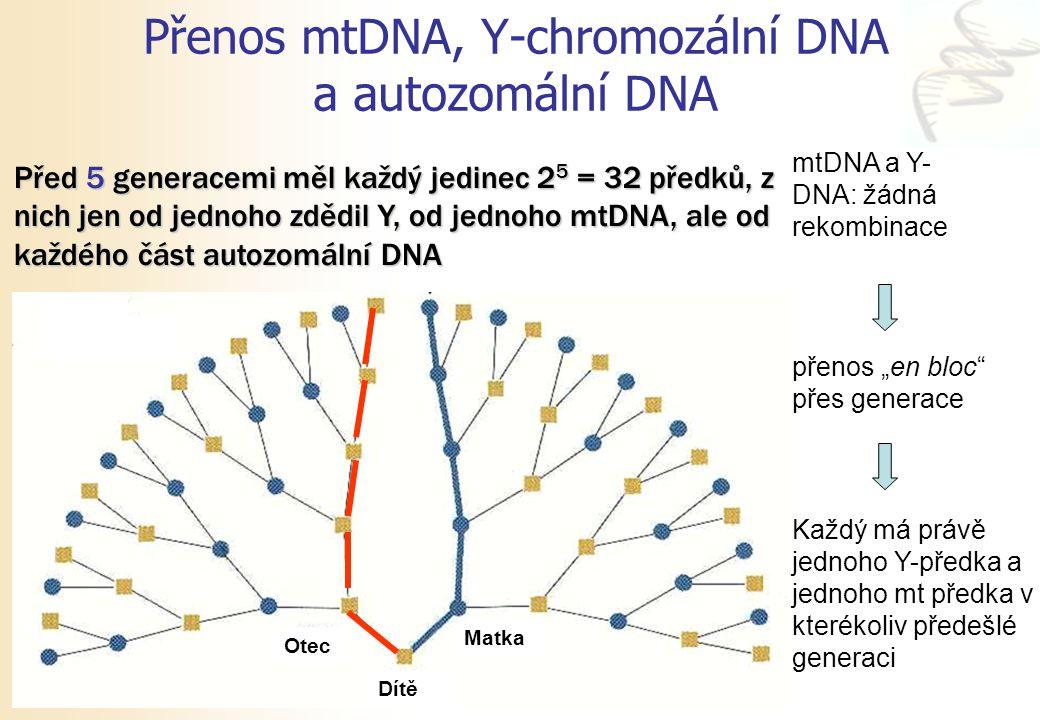 """Přenos mtDNA, Y-chromozální DNA a autozomální DNA mtDNA a Y- DNA: žádná rekombinace přenos """"en bloc"""" přes generace Každý má právě jednoho Y-předka a j"""