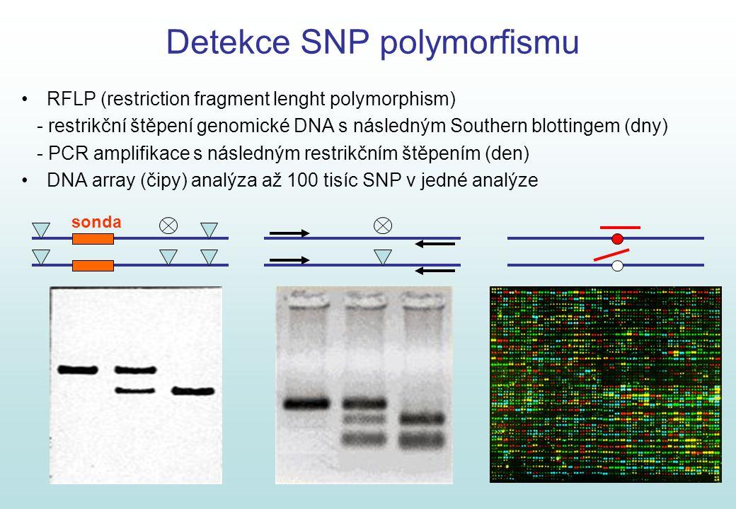 5 Detekce SNP polymorfismu RFLP (restriction fragment lenght polymorphism) - restrikční štěpení genomické DNA s následným Southern blottingem (dny) -