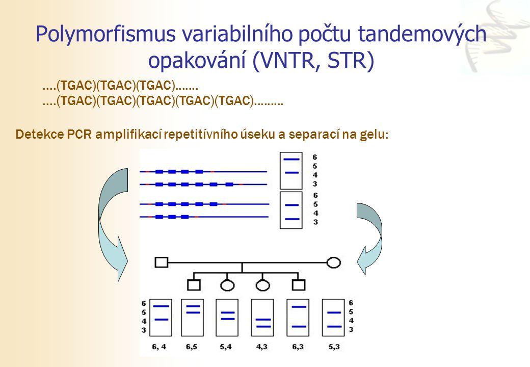 Polymorfismus variabilního počtu tandemových repeticí Minisatelity (VNTR) Délka základní repetice >6bp Počet opakování repetice 10 – 100 (1000) Výskyt preferenčně v telomerických oblastech ( bohaté na GC páry) Odhadovaný počet: cca 10 4 Jednoduchá detekce: Southern, PCR Vznik nových alel: nehomologický crossover Mutační frekvence: vysoká, až 10 -3 Využití: omezené; individuální identifikace Biologický význam: neznámý Spec.