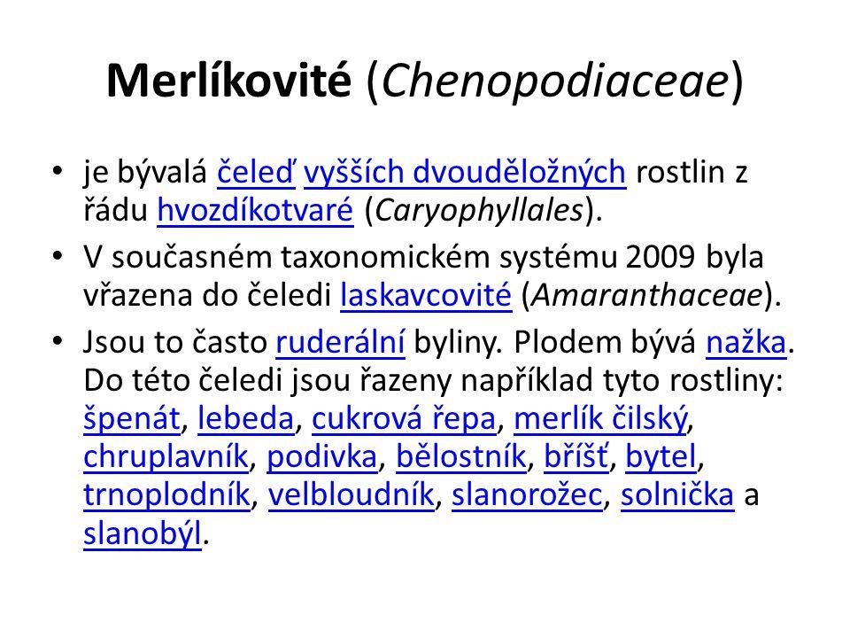 Merlíkovité (Chenopodiaceae) je bývalá čeleď vyšších dvouděložných rostlin z řádu hvozdíkotvaré (Caryophyllales).čeleďvyšších dvouděložnýchhvozdíkotva