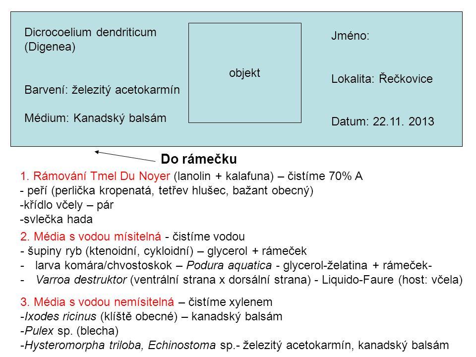 objekt Do rámečku Dicrocoelium dendriticum (Digenea) Barvení: železitý acetokarmín Médium: Kanadský balsám Jméno: Lokalita: Řečkovice Datum: 22.11.