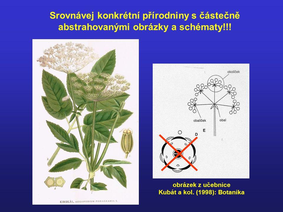Srovnávej konkrétní přírodniny s částečně abstrahovanými obrázky a schématy!!.