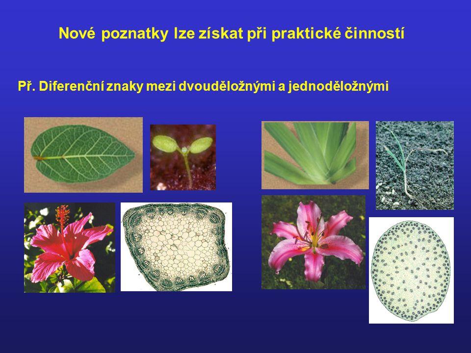 Teoretické vědomostí lze užít v praxi Př. determinace přírodnin