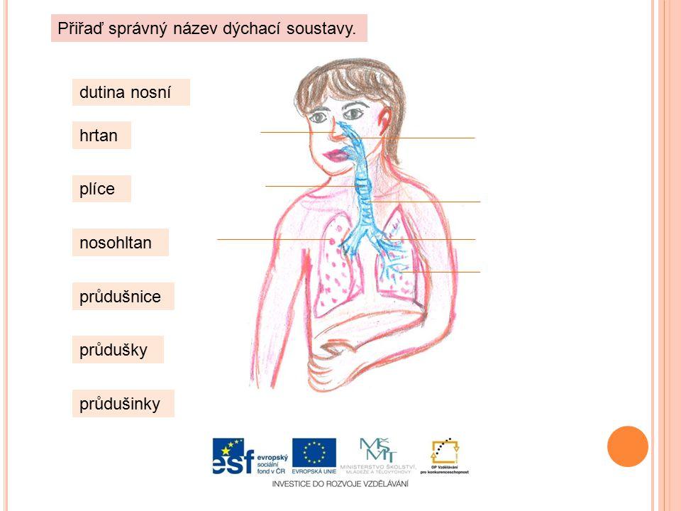 dutina nosní hrtan plíce nosohltan průdušnice průdušky průdušinky Přiřaď správný název dýchací soustavy.