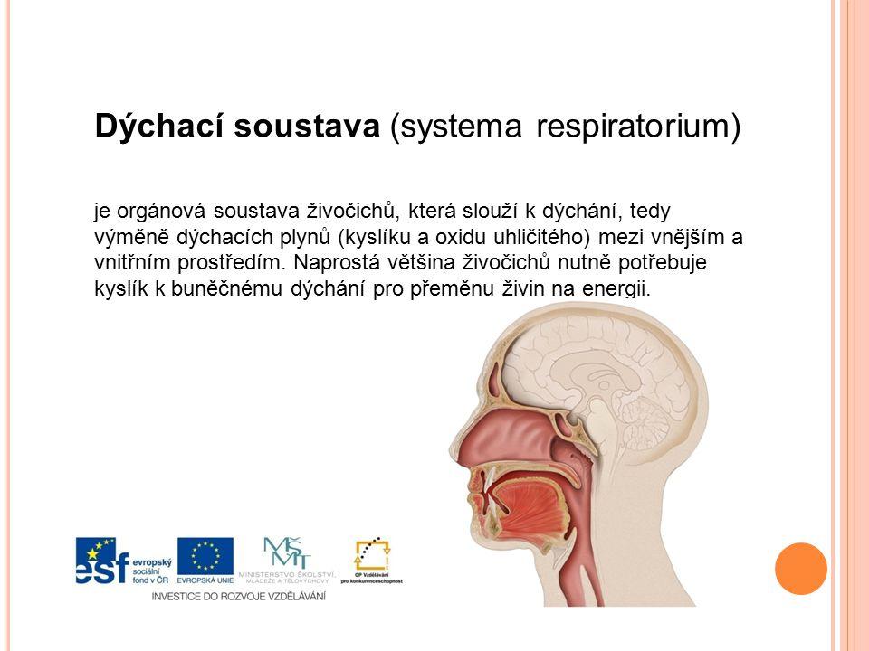 Dýchací soustavu tvoří dýchací cesty a plíce.Dýchací cesty dělíme na horní a dolní cesty dýchací.