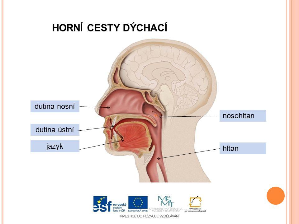 HORNÍ CESTY DÝCHACÍ dutina nosní dutina ústní jazyk nosohltan hltan