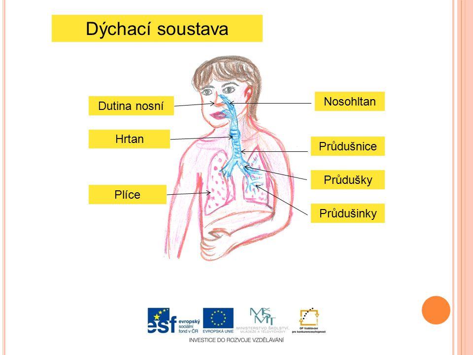 ŘEŠENÍ: Vyber názvy částí dýchací soustavy: průdušniceprůdušky průdušinky plicní sklípky nosohltandutina nosní plíce Horní cesty dýchací tvoří: DUTINA NOSNÍ, JAZYK, DUTINA ÚSTNÍ, NOSOHLTAN, HLTAN Dolní cesty dýchací jsou tvořeny: HRTAN, PRŮDUŠNICE, PRŮDUŠKY