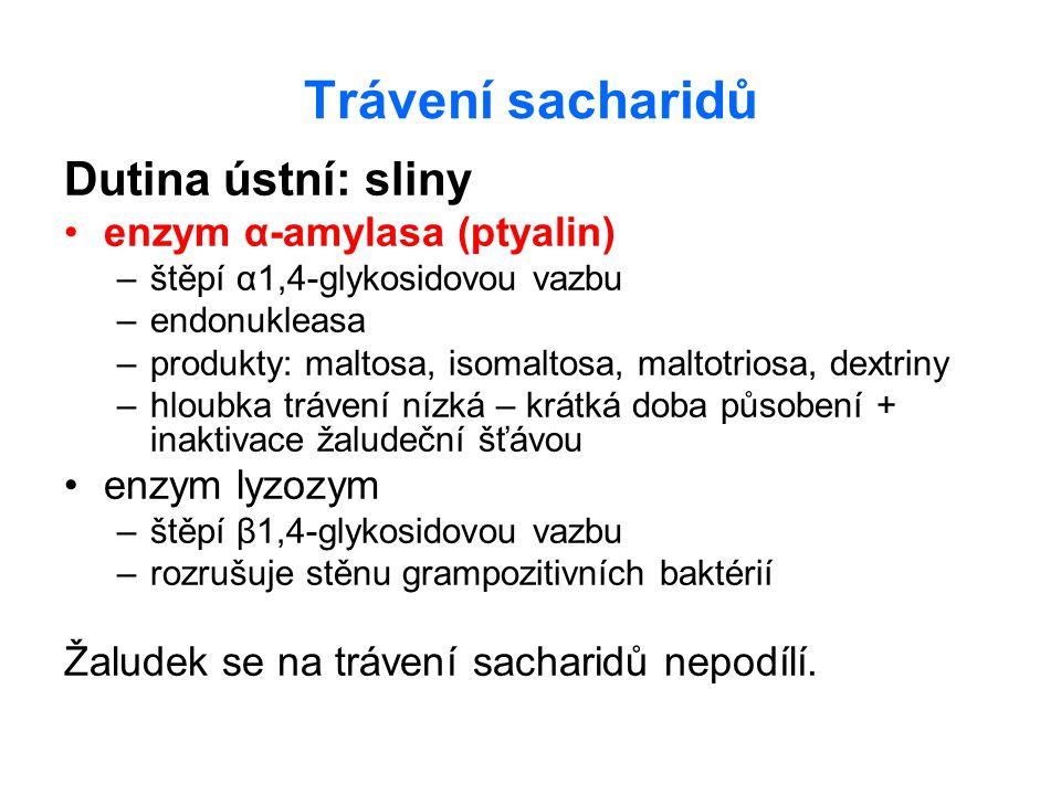 Trávení sacharidů Dutina ústní: sliny enzym α-amylasa (ptyalin) –štěpí α1,4-glykosidovou vazbu –endonukleasa –produkty: maltosa, isomaltosa, maltotrio