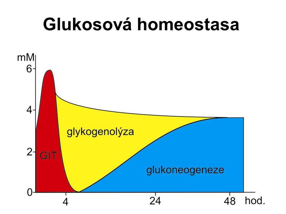 Glukosová homeostasa