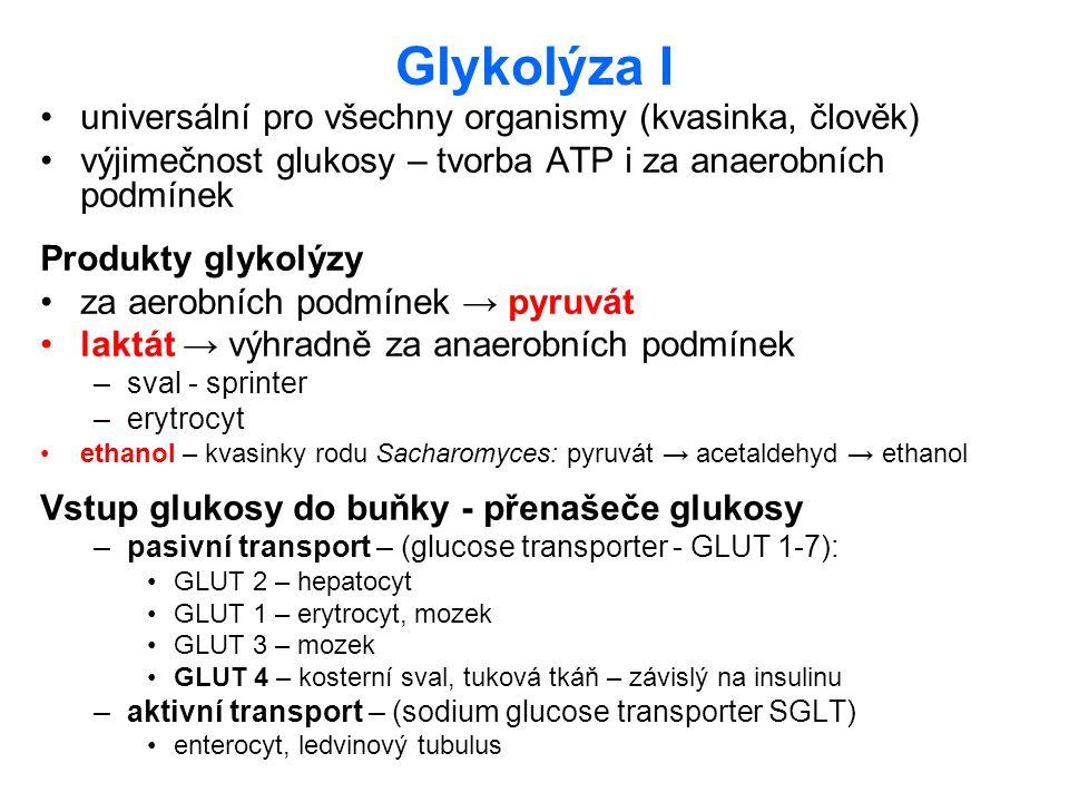 Glykolýza I universální pro všechny organismy (kvasinka, člověk) výjimečnost glukosy – tvorba ATP i za anaerobních podmínek Produkty glykolýzy za aero