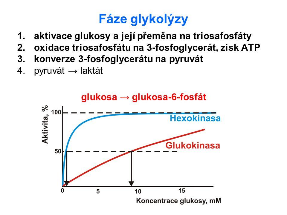Fáze glykolýzy 1.aktivace glukosy a její přeměna na triosafosfáty 2.oxidace triosafosfátu na 3-fosfoglycerát, zisk ATP 3.konverze 3-fosfoglycerátu na