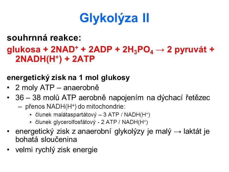 Glykolýza II souhrnná reakce: glukosa + 2NAD + + 2ADP + 2H 3 PO 4 → 2 pyruvát + 2NADH(H + ) + 2ATP energetický zisk na 1 mol glukosy 2 moly ATP – anae