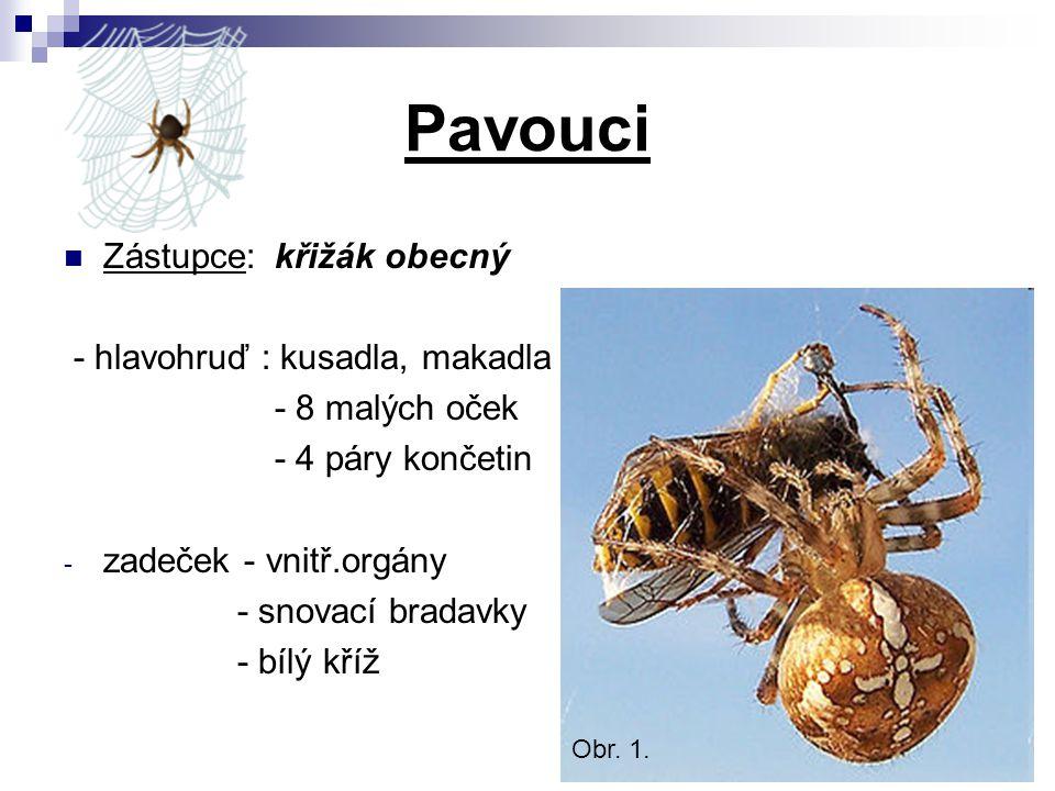 Pavouci Zástupce: křižák obecný - hlavohruď : kusadla, makadla - 8 malých oček - 4 páry končetin - zadeček - vnitř.orgány - snovací bradavky - bílý kř