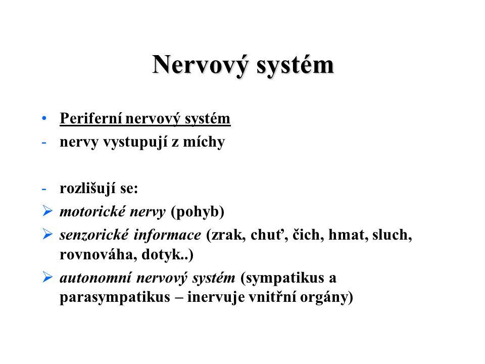 Nervový systém Periferní nervový systém -nervy vystupují z míchy -rozlišují se:  motorické nervy (pohyb)  senzorické informace (zrak, chuť, čich, hmat, sluch, rovnováha, dotyk..)  autonomní nervový systém (sympatikus a parasympatikus – inervuje vnitřní orgány)