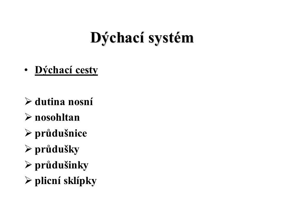Dýchací systém Dýchací cesty  dutina nosní  nosohltan  průdušnice  průdušky  průdušinky  plicní sklípky