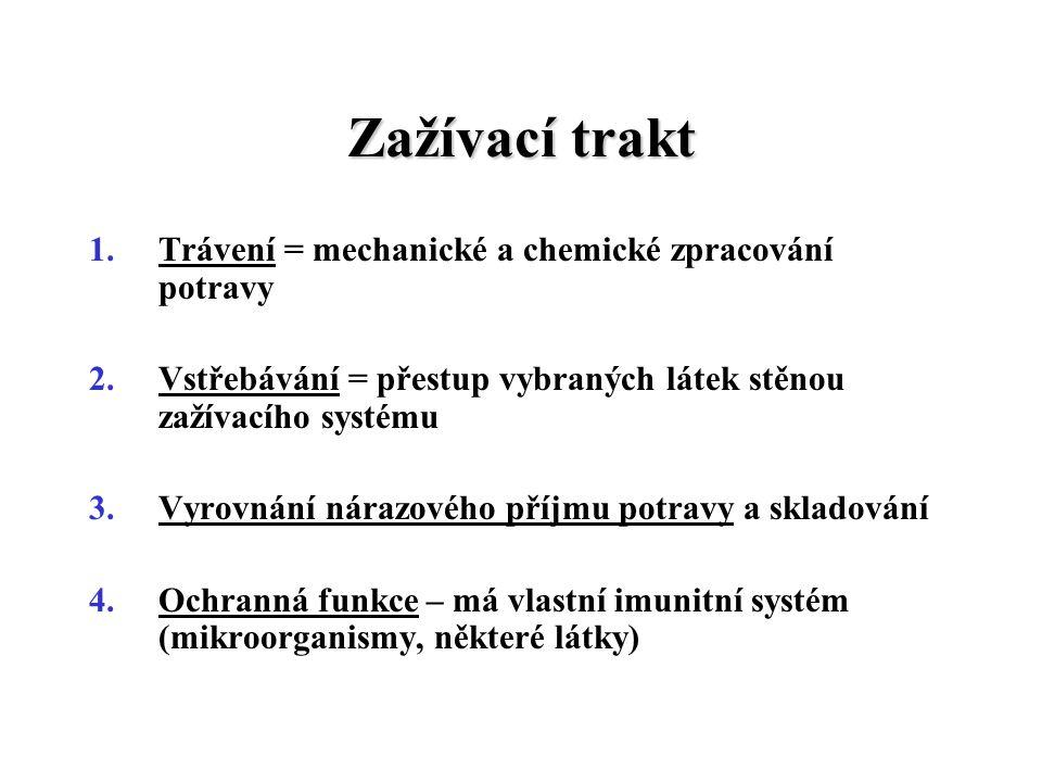 Zažívací trakt 1.Trávení = mechanické a chemické zpracování potravy 2.Vstřebávání = přestup vybraných látek stěnou zažívacího systému 3.Vyrovnání nára