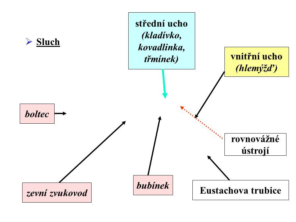  Sluch boltec zevní zvukovod bubínek střední ucho (kladívko, kovadlinka, třmínek) vnitřní ucho (hlemýžď) rovnovážné ústrojí Eustachova trubice