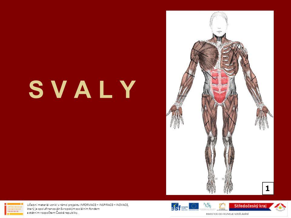 SVALY zajišťují pohyb celého těla –skákání, běhání 1.