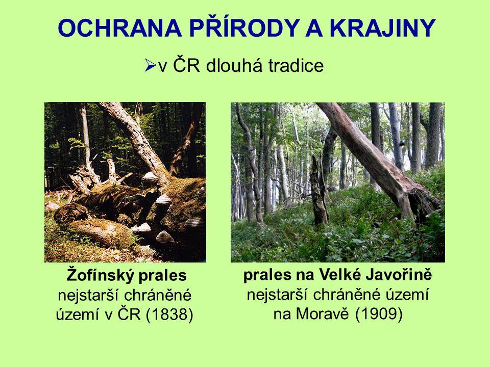 OCHRANA PŘÍRODY A KRAJINY  v ČR dlouhá tradice Žofínský prales nejstarší chráněné území v ČR (1838) prales na Velké Javořině nejstarší chráněné území