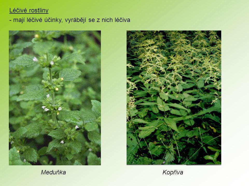 Léčivé rostliny - mají léčivé účinky, vyrábějí se z nich léčiva MeduňkaKopřiva