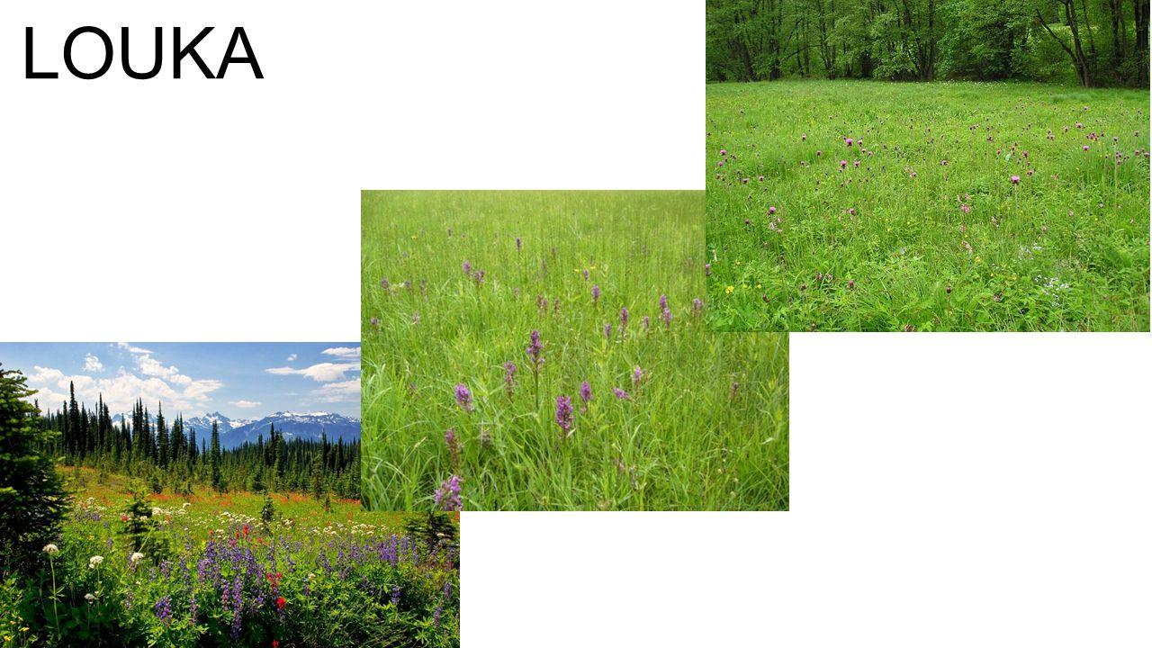 vlhkost stanoviště způsob obhospodařování člověkem trávy: vzhled a druhová skladba
